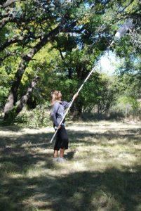 Jenny Singleton, Monarch Butterfly tagging