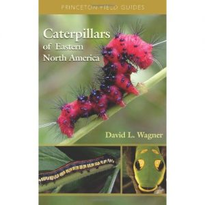 Caterpillars of North America