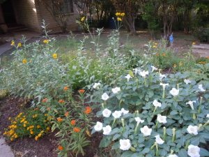 Does your butterfly garden do this in August? Cowpen Daisy, Jimsonweed and lantana