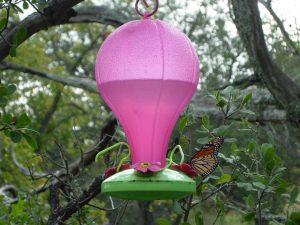Monarch buttefly on hummingbird feeder