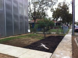 "Future butterfly garden. Hilary Scruggs ""Cube"" has a grey water sprinkler system"