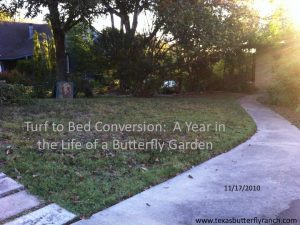 Turf to bed conversion: 12 months in the life of a butterfly garden, Austin, TX