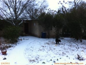 Snow in Austin, TX, Feb. 4, 2011!