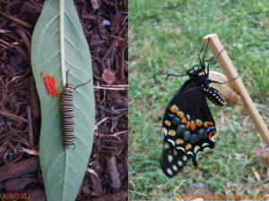 April: Butterfly season in full swing!