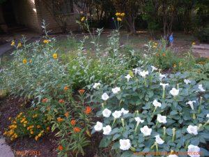 Butterfly garden, July 1, 2011
