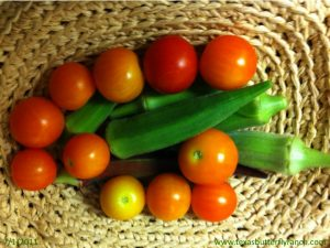 Cherry tomatoes, okra from the butterfly garden