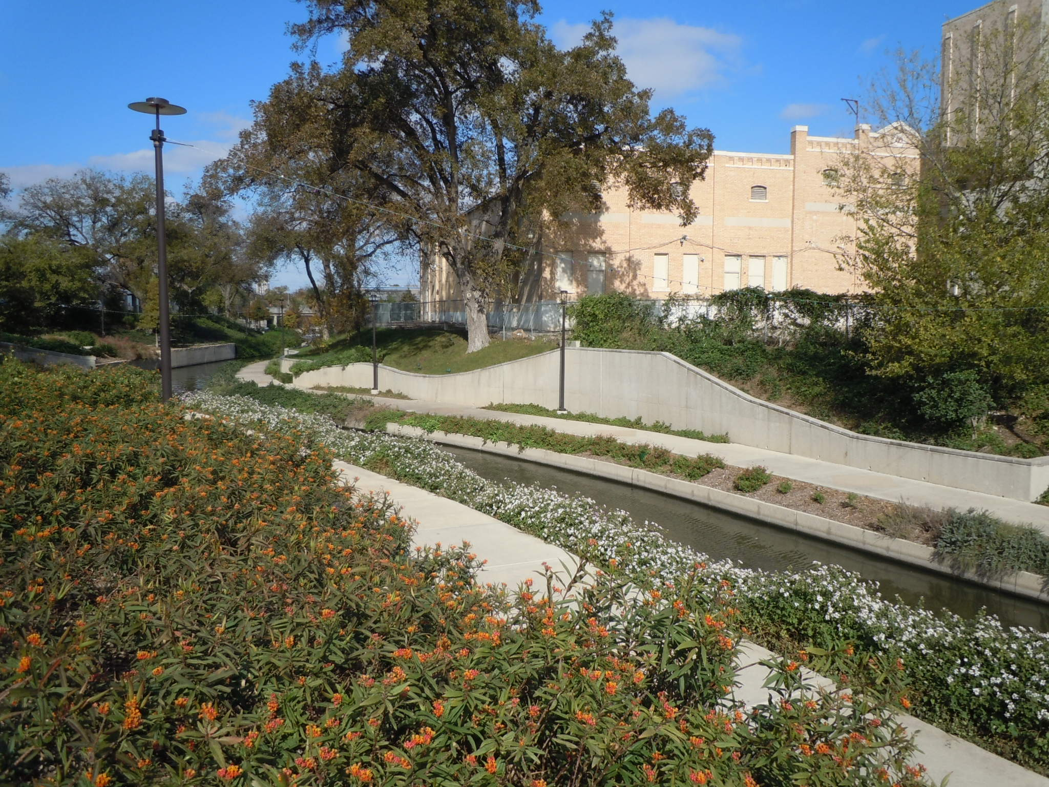 The Museum Reach Milkweed Patch on the San Antonio Riverwalk