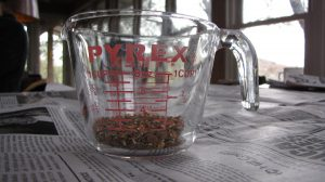 One fourth cup of seed from all thoseThornapples--now we know why they're so expensive!