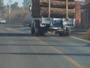 Deforestation in Mexico is still a problem