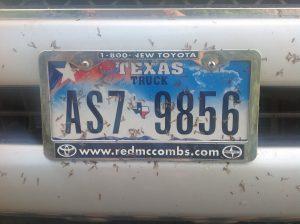 Termite hatch left bug detritus everywhere