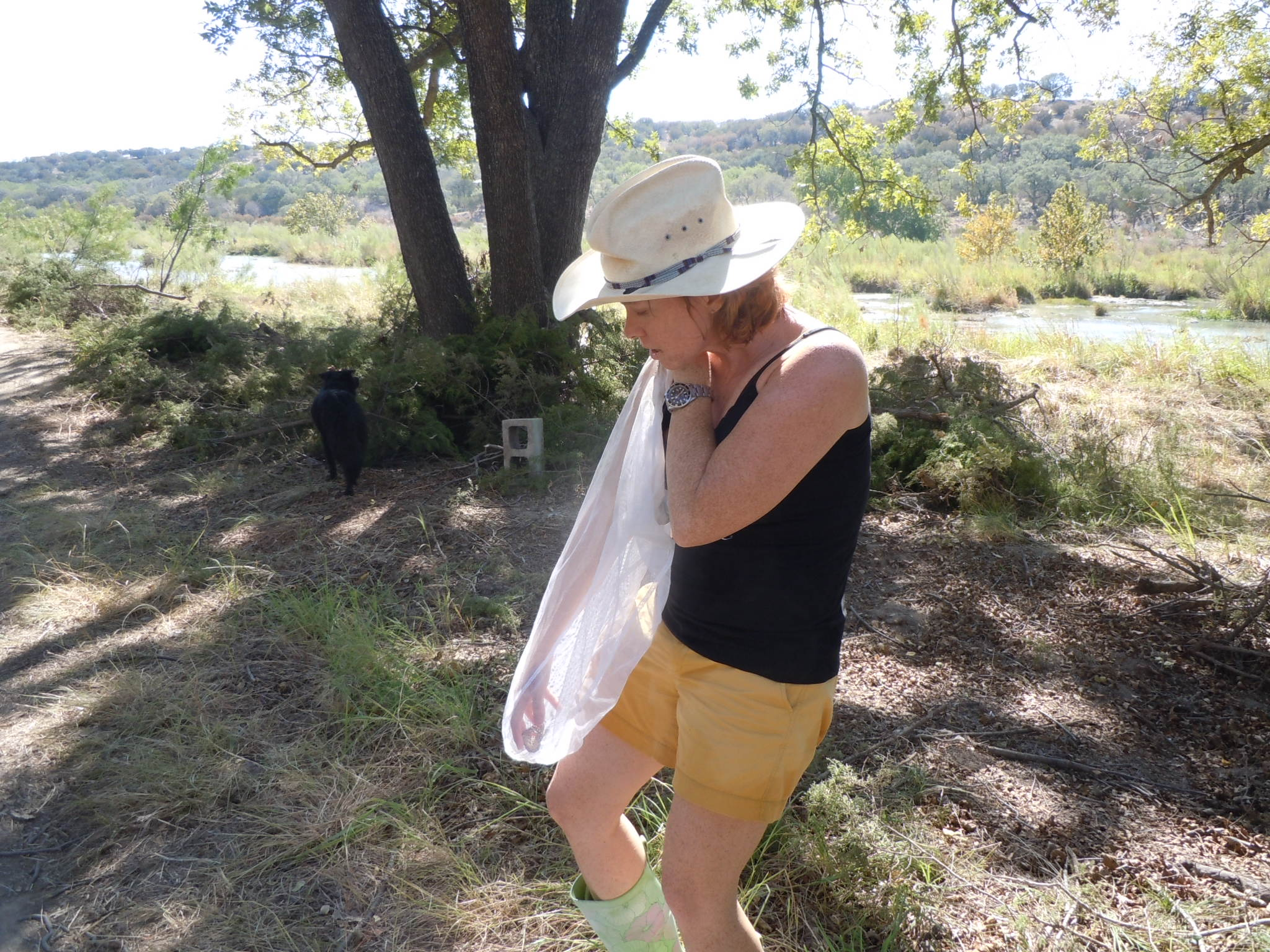 Tracy Hamilton shows how to retrieve a Monarch from the net.