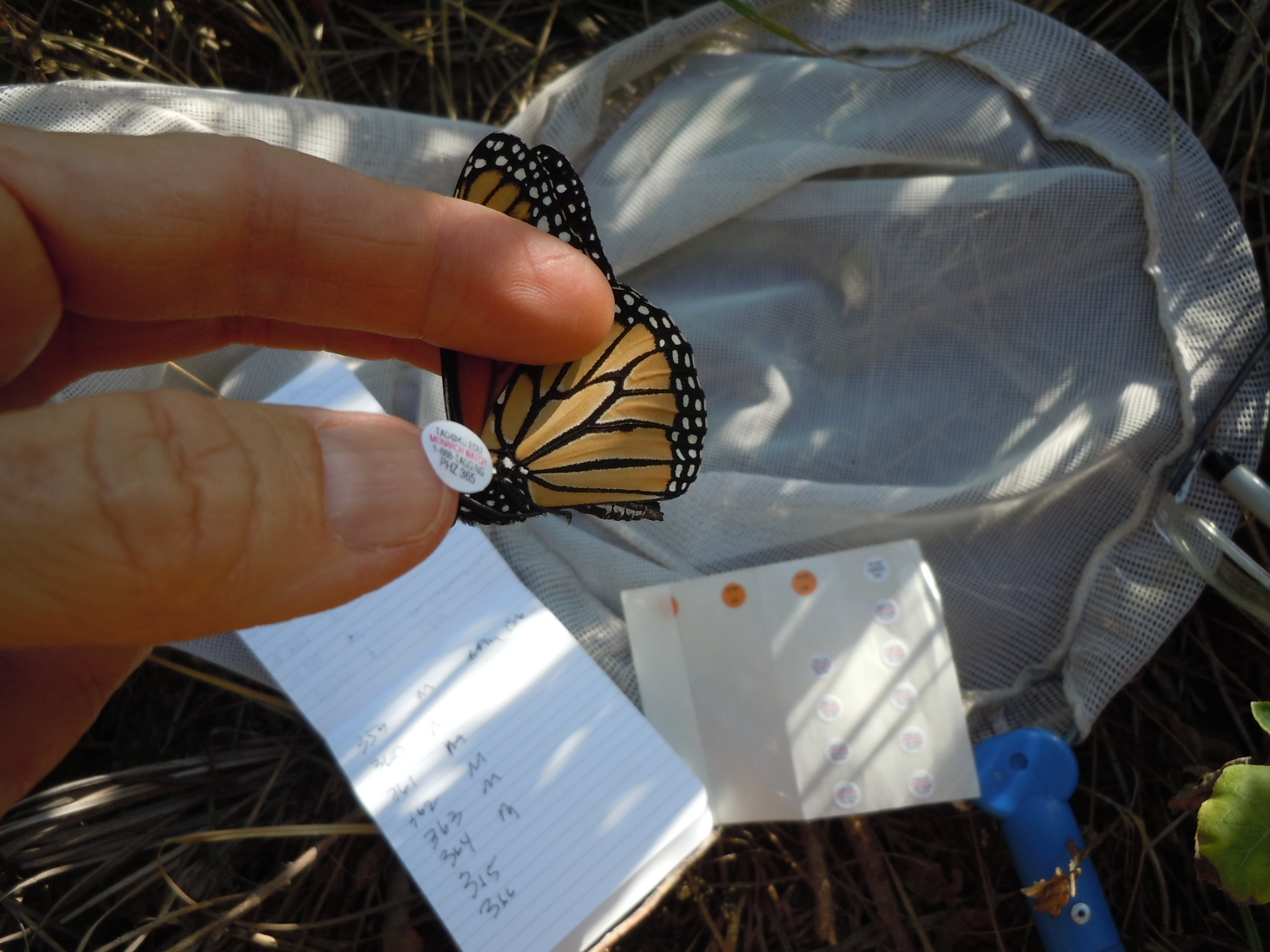 Use your thumbnail to lift tag from sheet and transfer to butterfly.