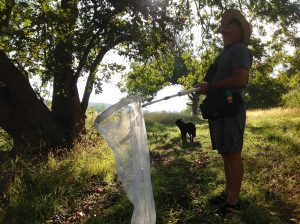 Bob Rivard Tags Monarch Butterflies on the Llano