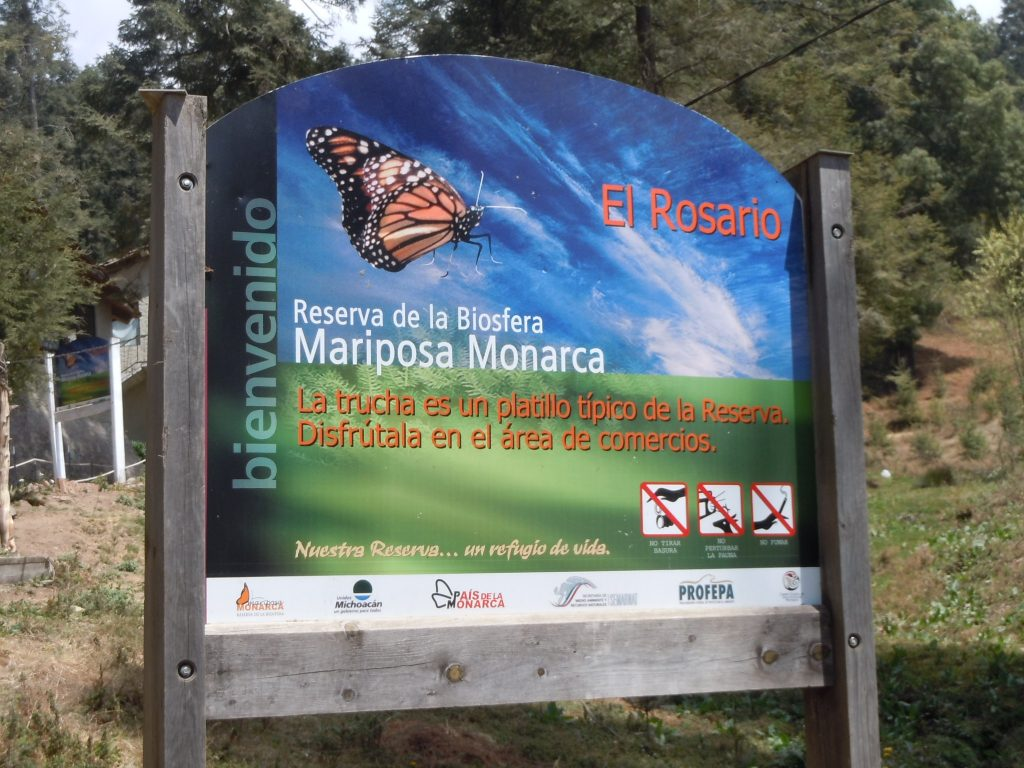 El Rosario Preserve in Michoacán. Photo by Monika Maeckle
