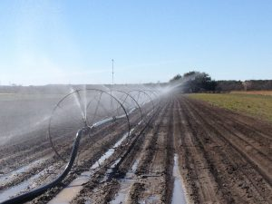 Irrigating at Native American Seed