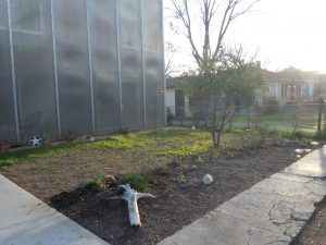 Future butterfly garden in Lavaca