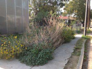 Lavaca garden, November 2012