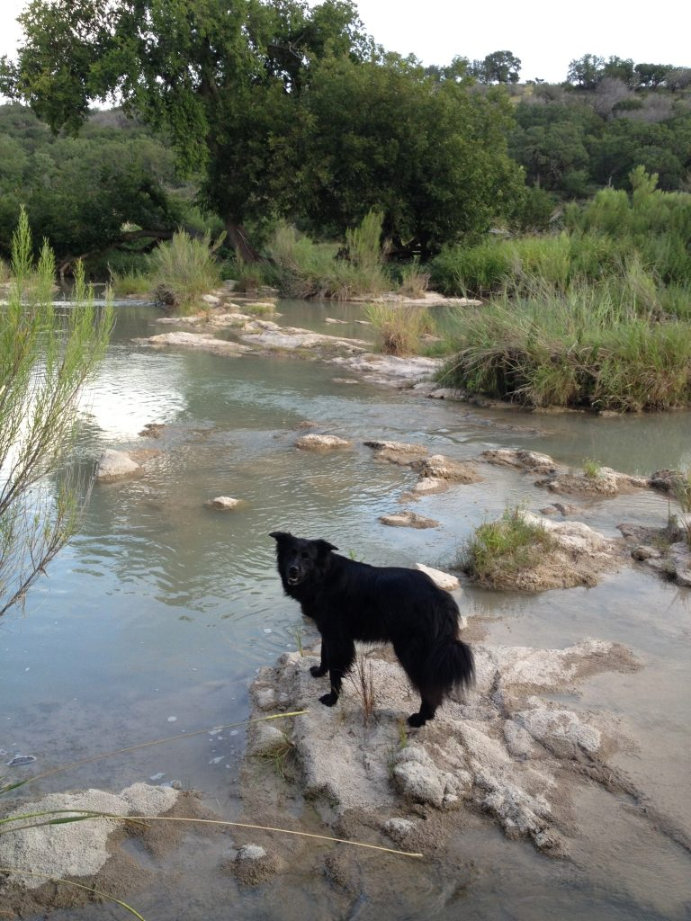 Cocoa on the Llano river