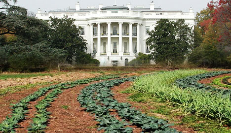 Whitehouse vegetable garden