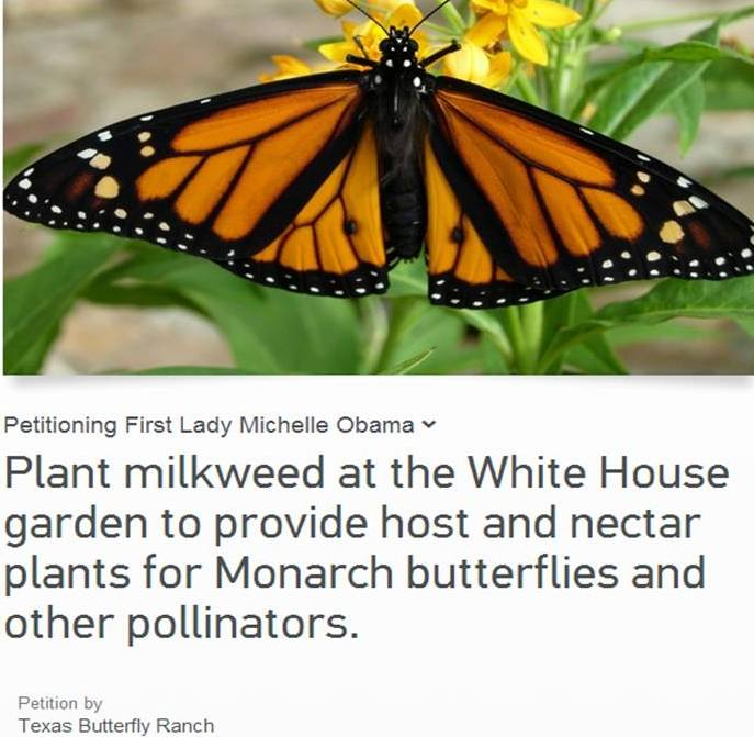 Michelle Obama, please plant milkweed at the White House