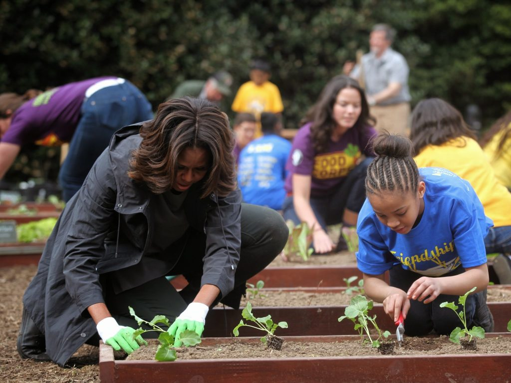 First Lady Michelle Obama busy at the White House Kitchen Garden where she recently added pollinator plants, including two species of milkweed.  Photo via Obama Foodorama