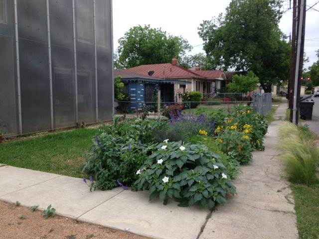 Urban butterfly garden