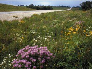 Integrated vegetation management
