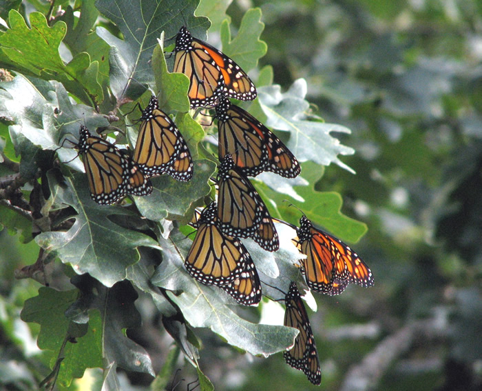 Monarch Roost Wisconsin
