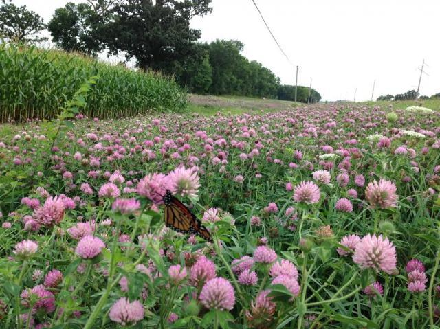 Nectar corridor