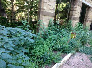 CPS Energy pollinator garden
