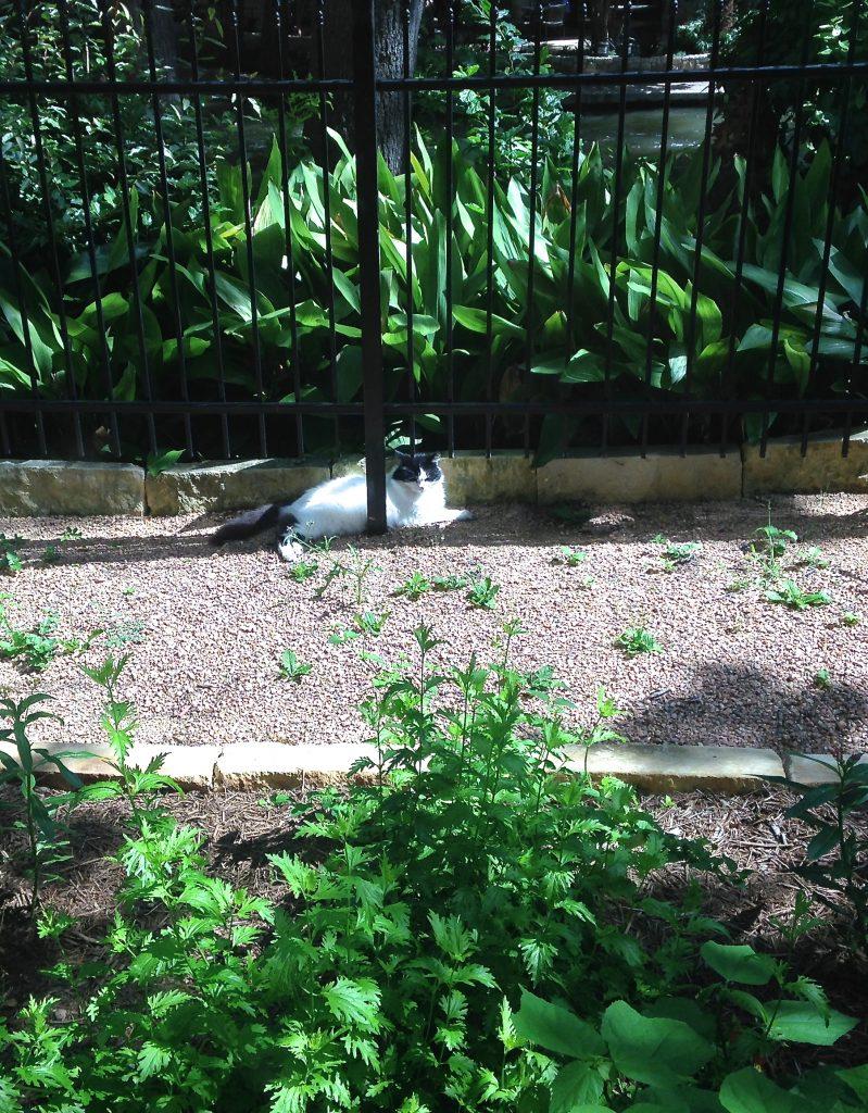 Polly the Pollinator Garden cat