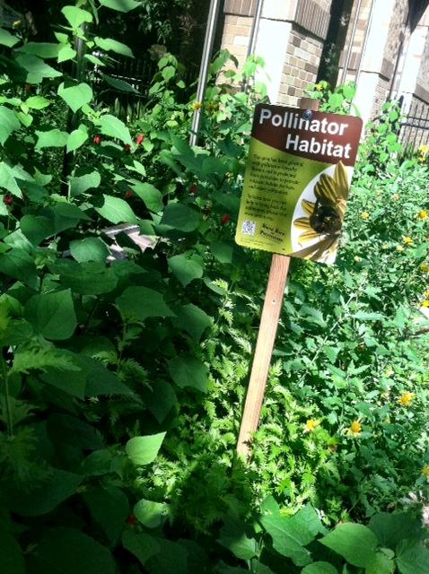 Pollinators CPS Energy