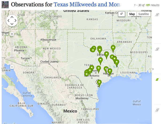 Texas Parks and Wildlife hopes to map milkweed throughout the Lone Star State via the iNaturalist app.