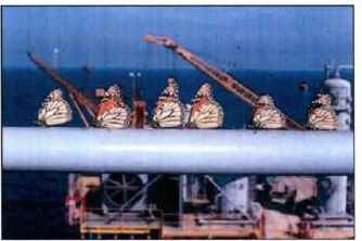 Monarch butterflies resting on oil rig rail in Oct. - Nov. 1993.  Photo courtesy Dr. Gary Noel Ross