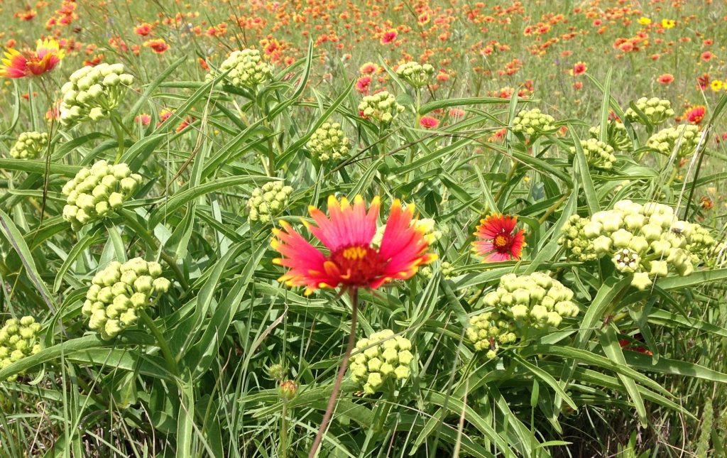 Antelope horns and Indian blanket