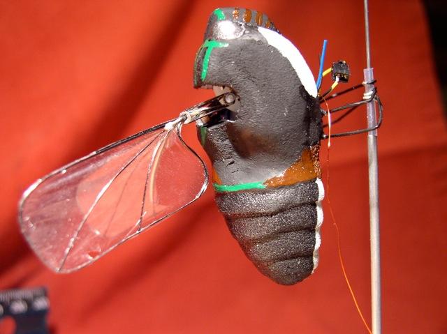 Moth MAV