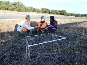 UTSA students milkweed survey
