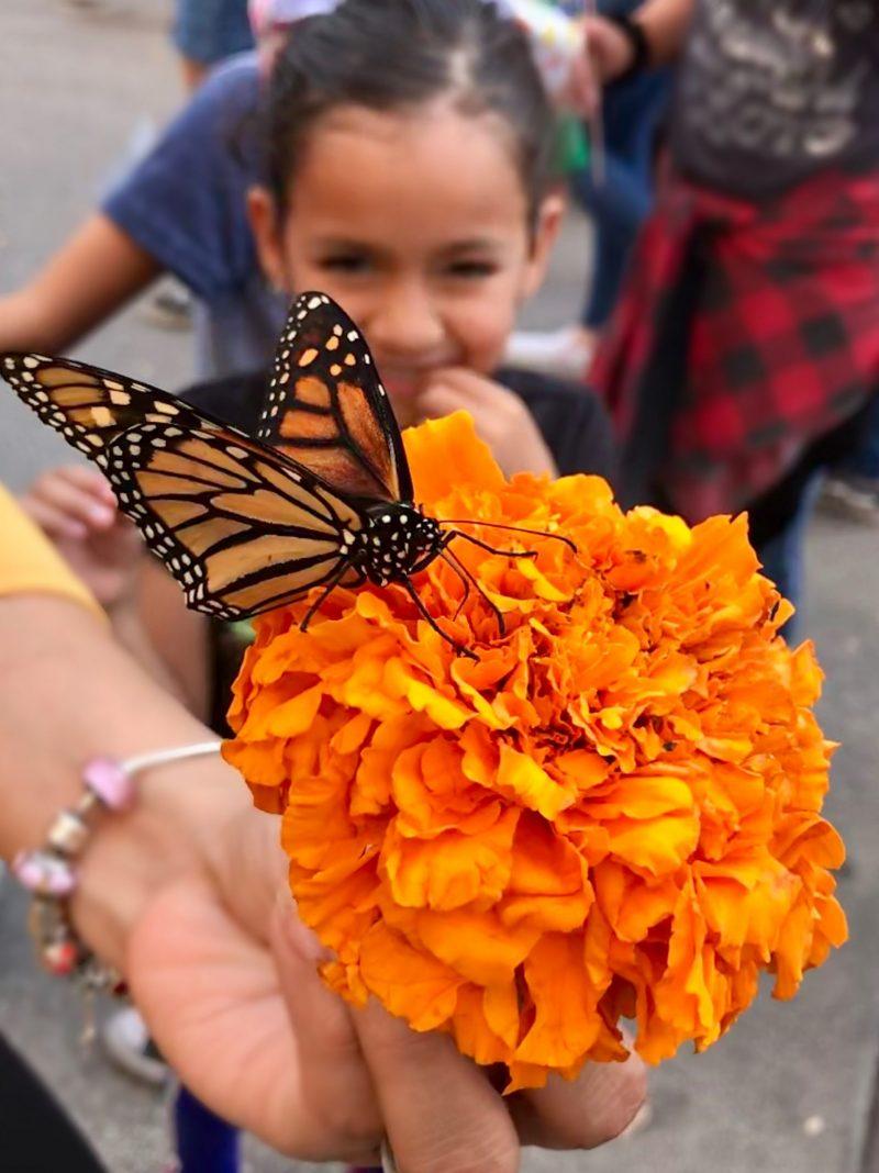 monarch on marigold